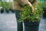 5 Reasons Why You Should Make Your Home Eco-Friendly