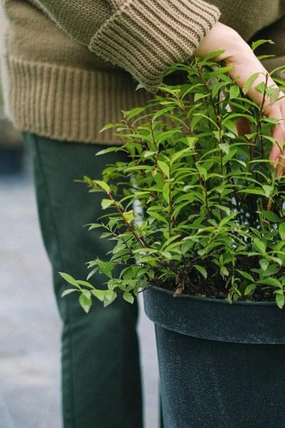eco-friendly plant