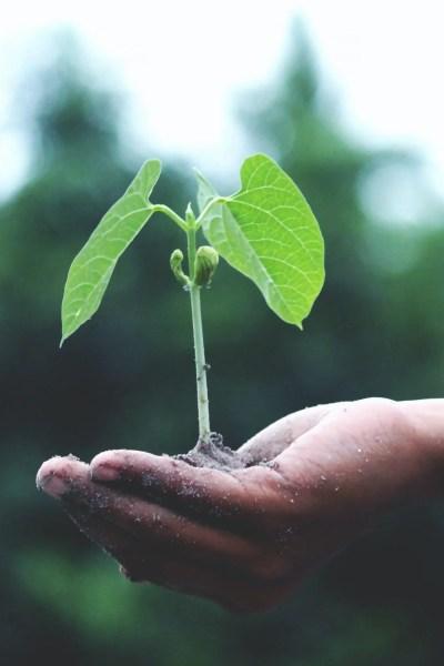 growing edible garden