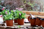 Essential Cultivation and Care Tips for Flower Gardens
