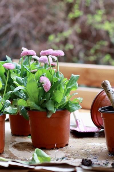 gardening-garden
