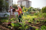 Vegetable Gardening: What to Grow and How Long it Takes