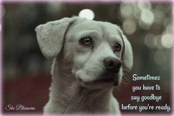 Ways to Deal With Guilt and Grief After Rehoming Your Dog