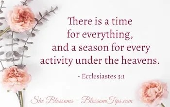 What is Gods will for my life exodus 31 she blossoms