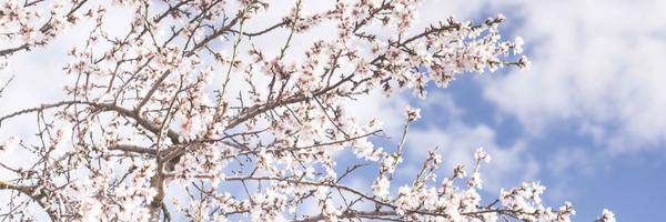 Lets Blossom Together