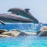 イルカが同時にジャンプするのも共鳴行動のシンクロニシティーです