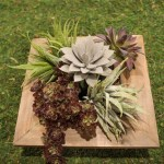 DIY Succulent Centerpiece that is so easy to make! -Learn How To Make Them On B. Lovely Events