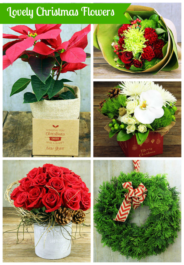 Lovely Christmas Flowers To Brighten Your Season!