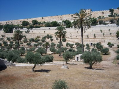 The Kidron Valley is surrounded by and filled with tombs, some historic and others quite contemporary. Burials were not permitted within the city walls, so the valley became a convenient place for the tombs.