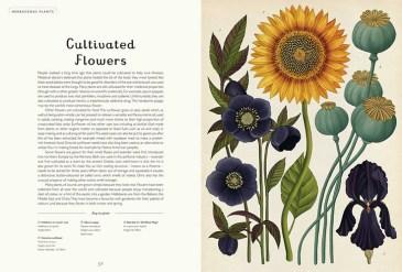 botanicum-4