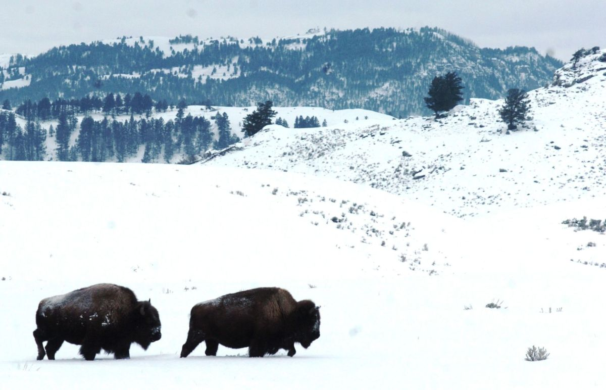Buy Sell Agreement Montana