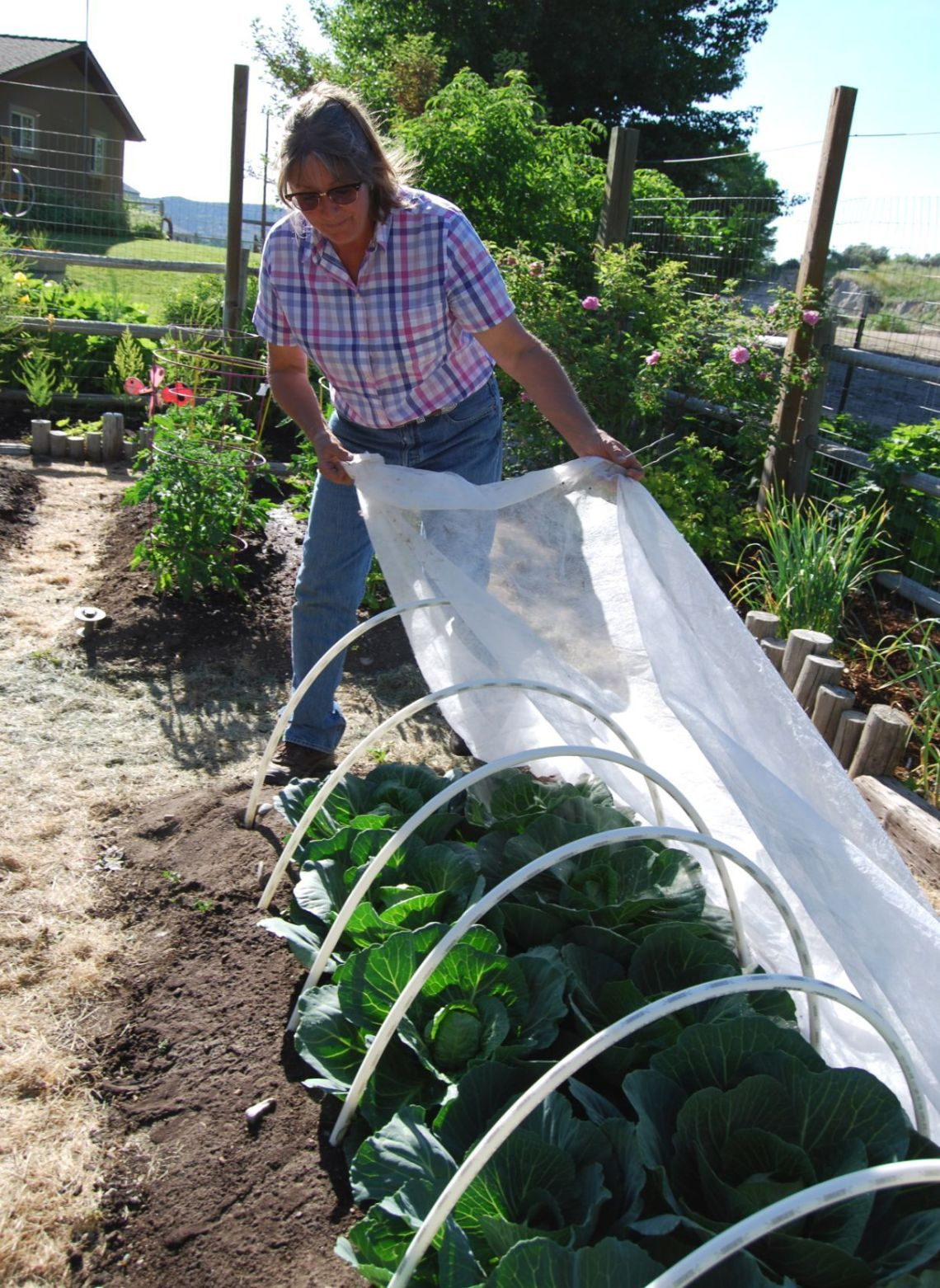 Gardeners Offer Tips For Growing Food In The High Desert Lifestyles Elkodaily Com
