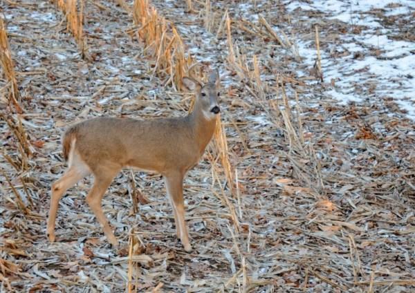 Durkin: Holiday deer hunt surpasses expectations ...