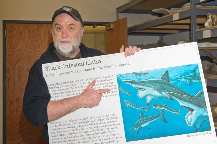 Troll with shark poster