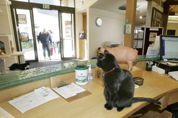 Elsie the Library Cat (1/2)