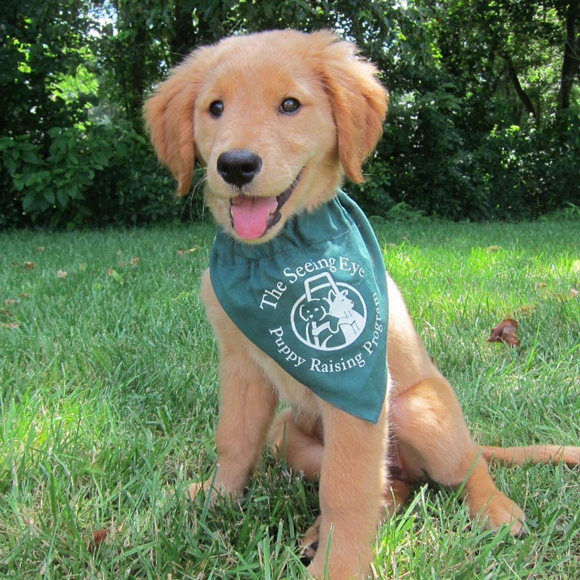 Seeing Eye In Morristown Seeks Puppy Raisers