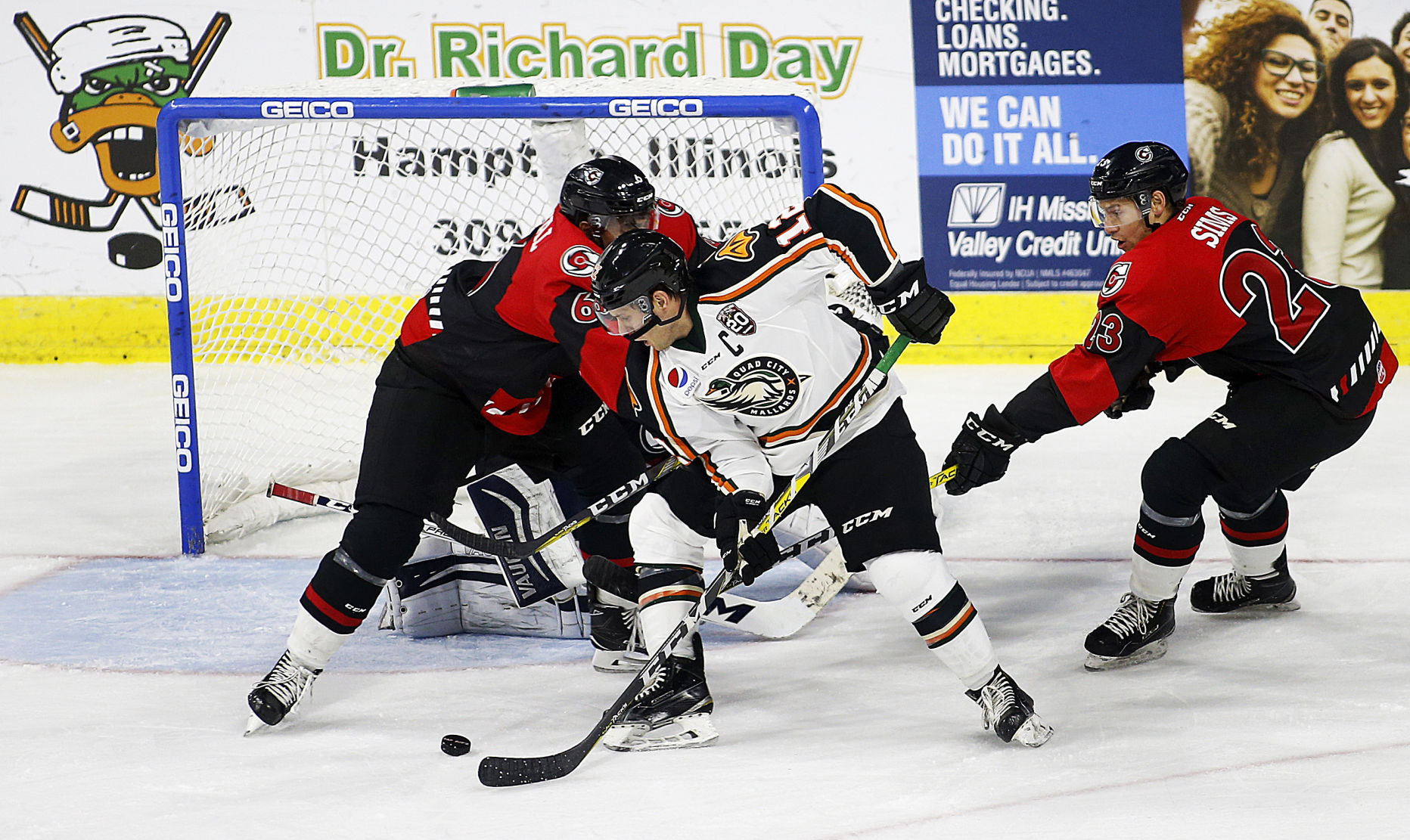 Image result for photo of chris francis and echl quad city mallards