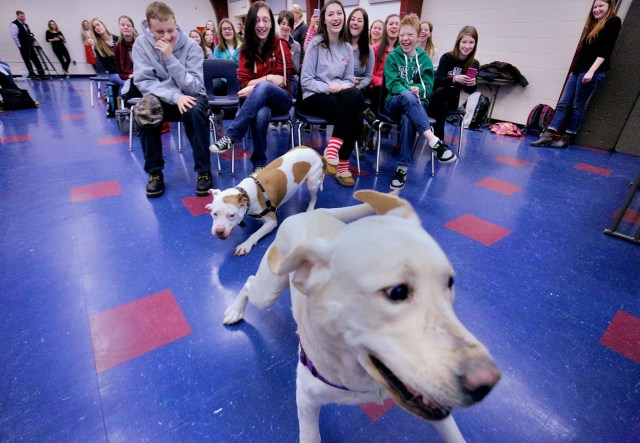 therapy dogs could bring cute, canine comfort to keene high | local