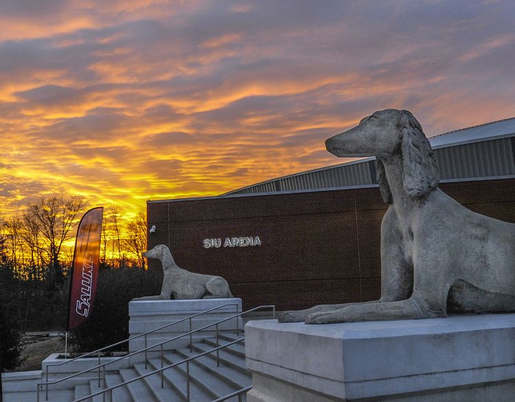 Leisure | Saluki: More than a mascot | | thesouthern.com