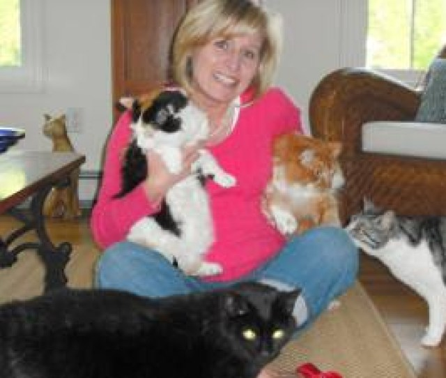 Harmony Reigns In Seven Cat Household