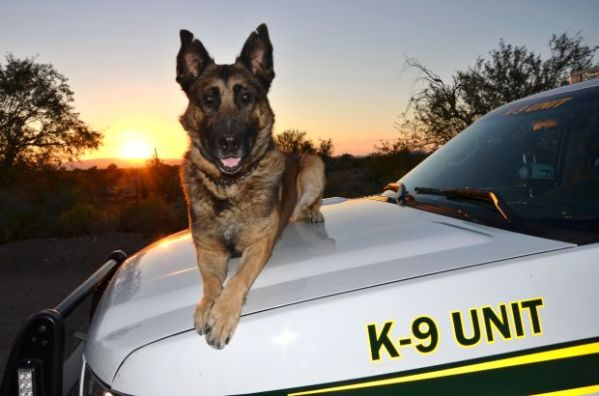 Pima County sheriff's K-9 dies after freak accident