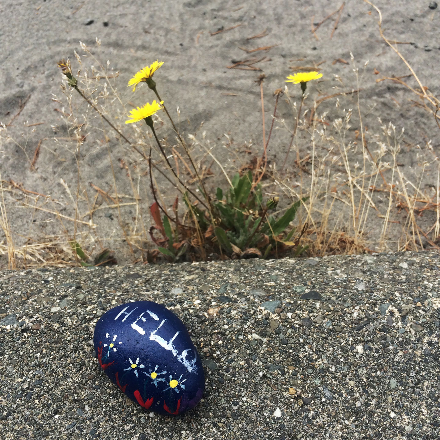 Hiding In Plain Sight Painted Rock Hunting Comes To The