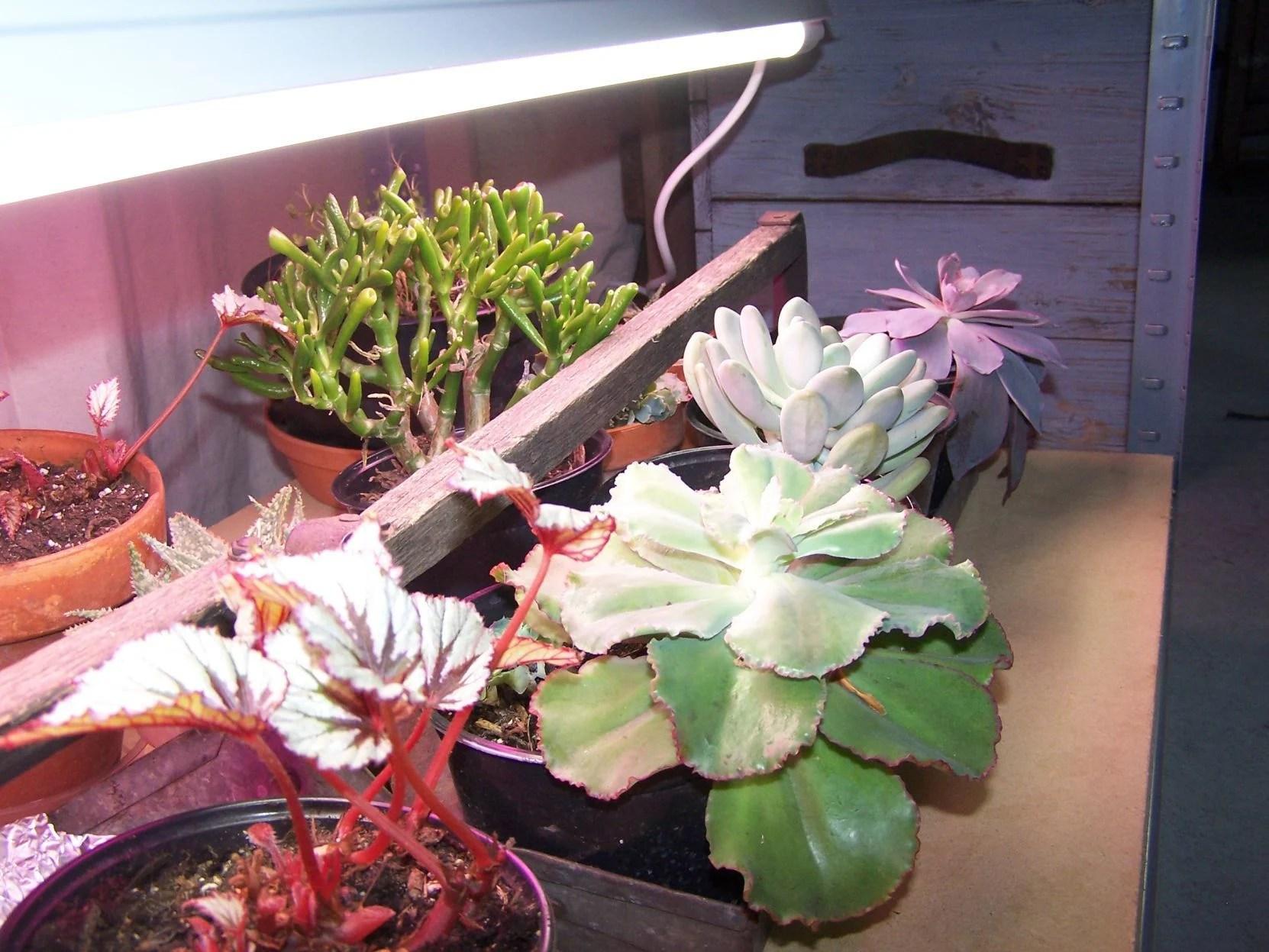 Artificial Lighting Helps Houseplants In Winter Columnists Kpcnews Com