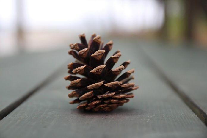 ผลการค้นหารูปภาพสำหรับ Pine Cone Stars Craft Ideas