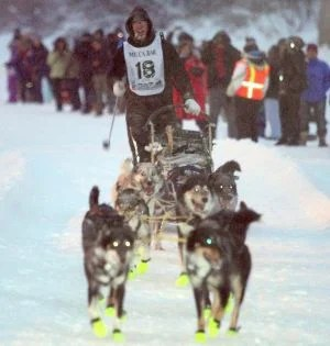 2013 Yukon Quest Brent Sass courtesy of Sam Harrel/ Fairbanks Daily News Minor