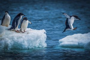 ECOVIEWS: Can life exist on a cold planet?     Features