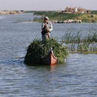 Unexpected rainfall revives Iraq's historic marshlands; Raya Jalabi; Reuters