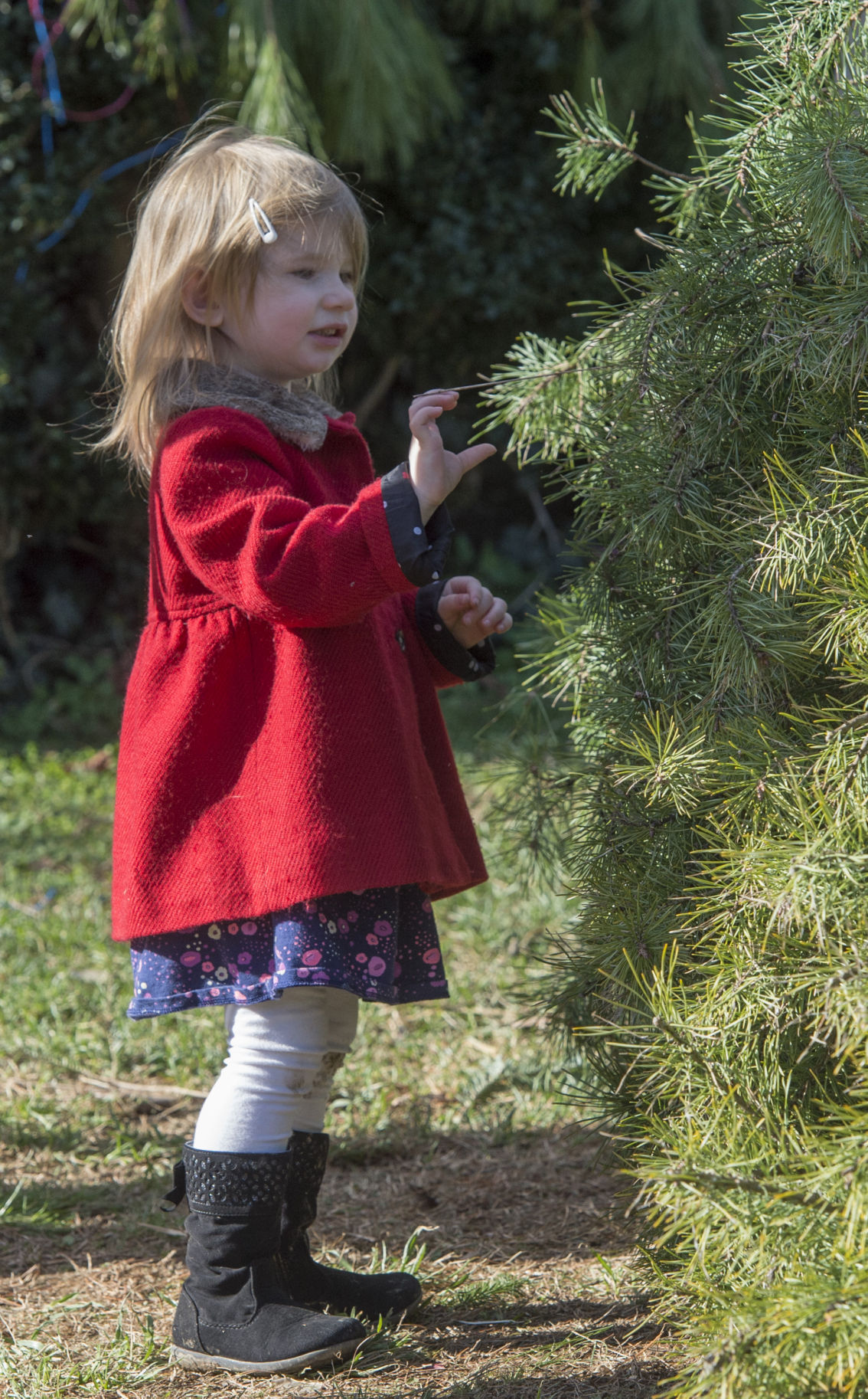 Last Minute Christmas Tree Shoppers Get In The Holiday