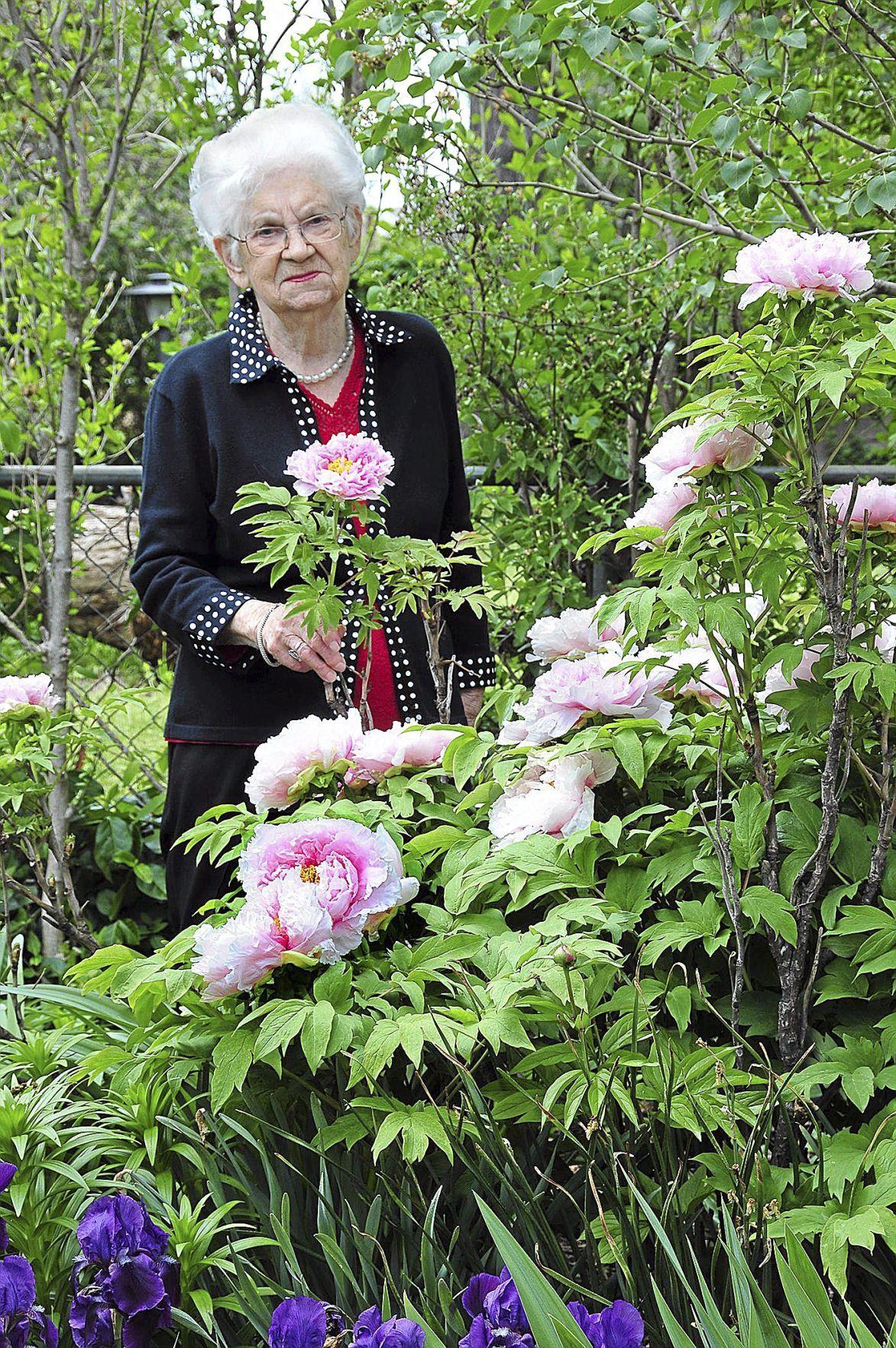Master Gardener Assisting The Elderly With Gardening