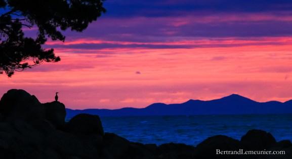 Cormoran au lever de soleil depuis Bark Bay