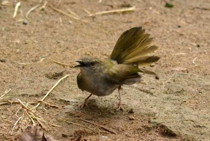 Mystery Bird - Jane Morris