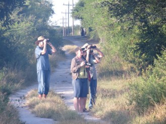 Birding around Ilala Palm Park
