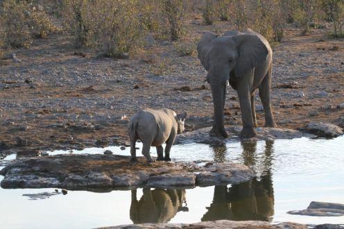 Elephant & Black Rhino faceoff. Etosha