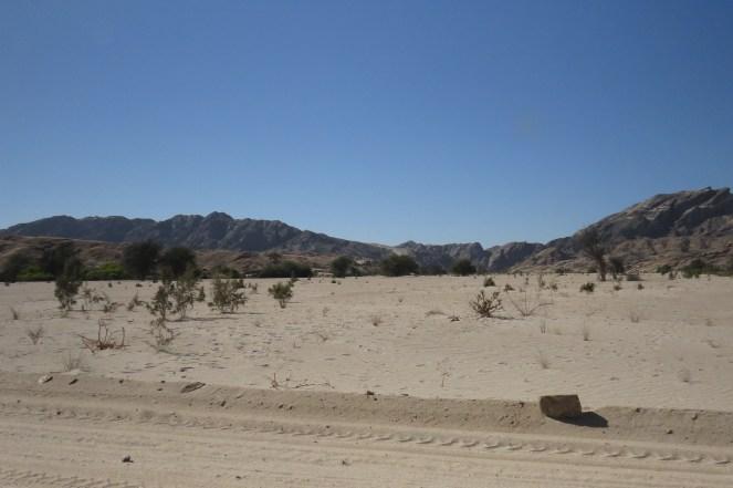 Landscape around the Welwitschia plant.
