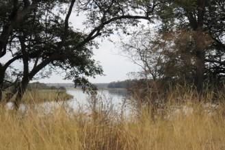 Buffalo Park Wetland