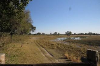 Wetland next to camp