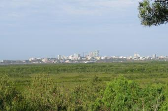 View over the mangroves towards town