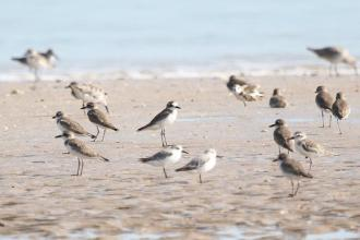Mixed Waders, Lee Point