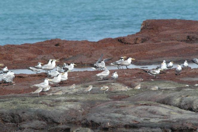 Selection of Terns, East Point