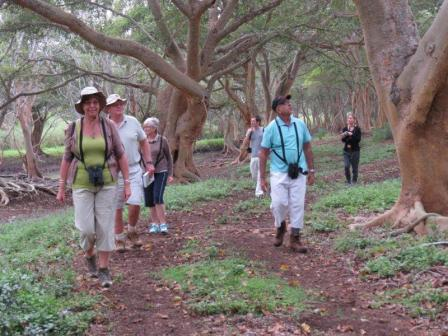 BLPN members walking in fig forest