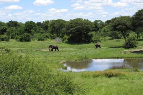Swamp elephants