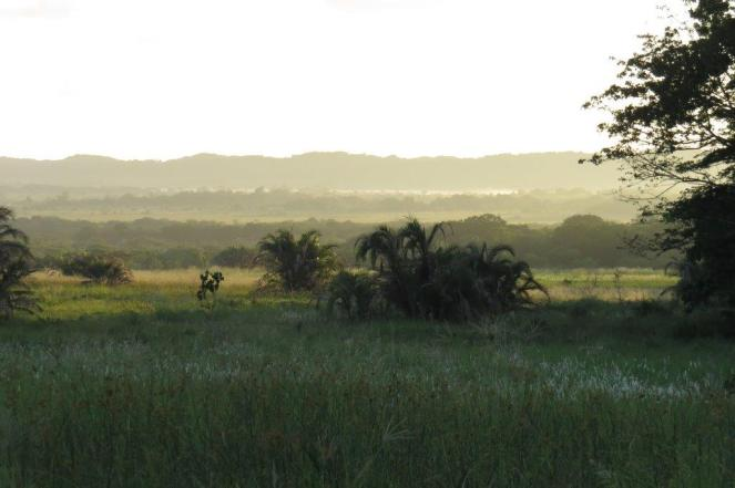 Western Shores Habitat - early morning, eerie light