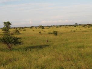 Grassland north of Satara
