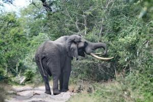 Large bull elephant keeping us warily at a distance