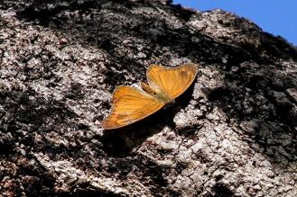 UI Butterfly