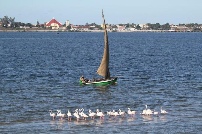 Dhow and Flamingos - opp Inhambane
